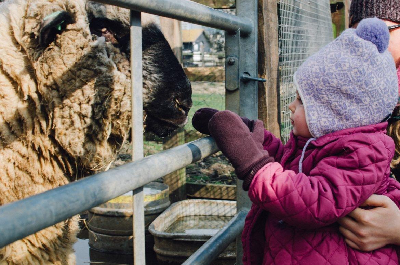 Kentish Town City Farm