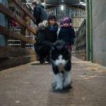 Stepney City Farm Review