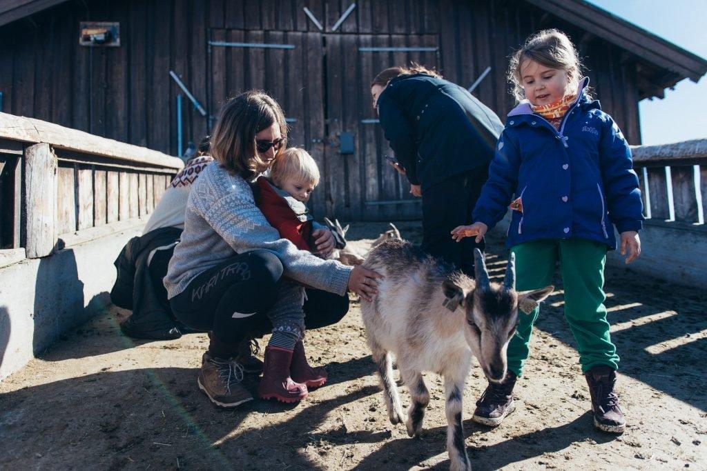 Farm animals at Langedrag