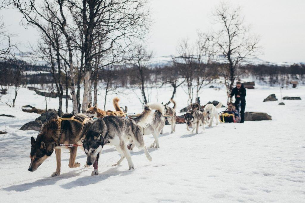 Dog sleigh at Langedrag