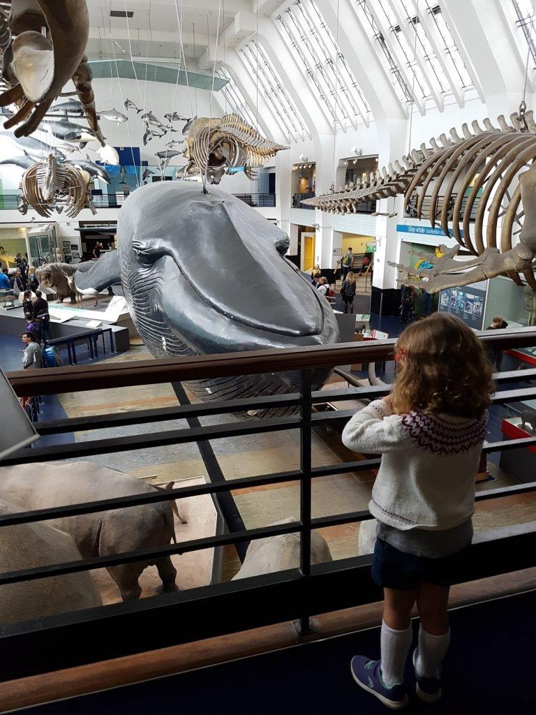 Looking at mammals at the Natural History Museum