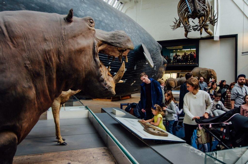 Mammals at the Natural History Museum