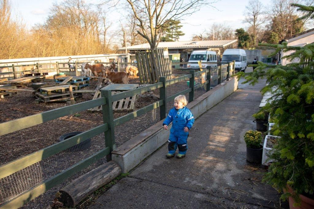 Boy exploring the farm