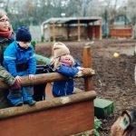 Review of Spitalfields City Farm