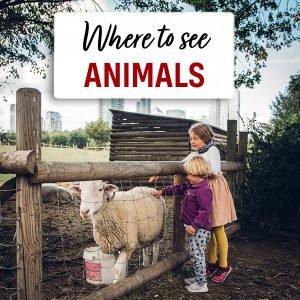 animals in london
