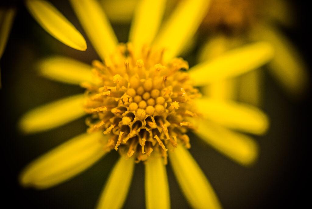 Flower in Greenwich Peninsula Ecology Park