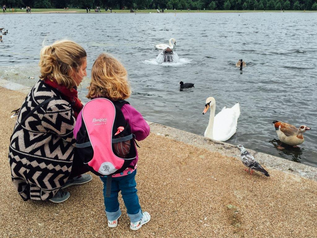 Swans in Kensington Gardens