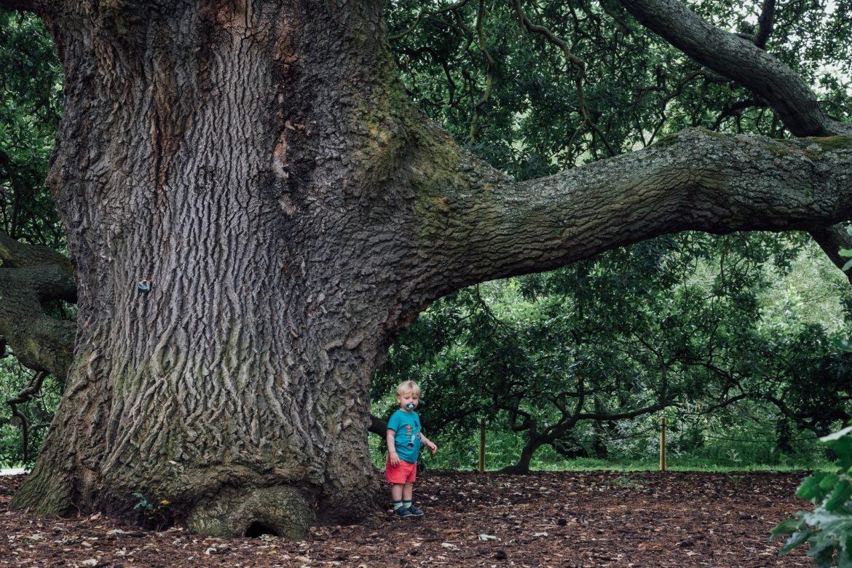 Boy standing under a big tree in Kew Gardens