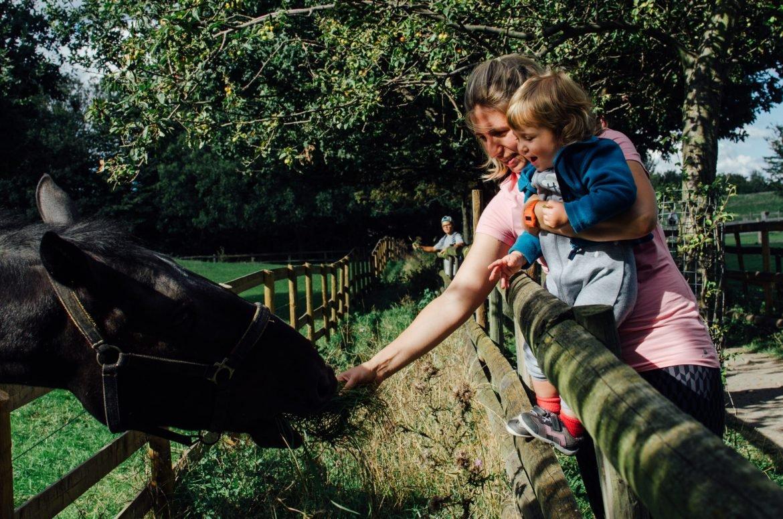 Mudchute Farm Feeding Horses