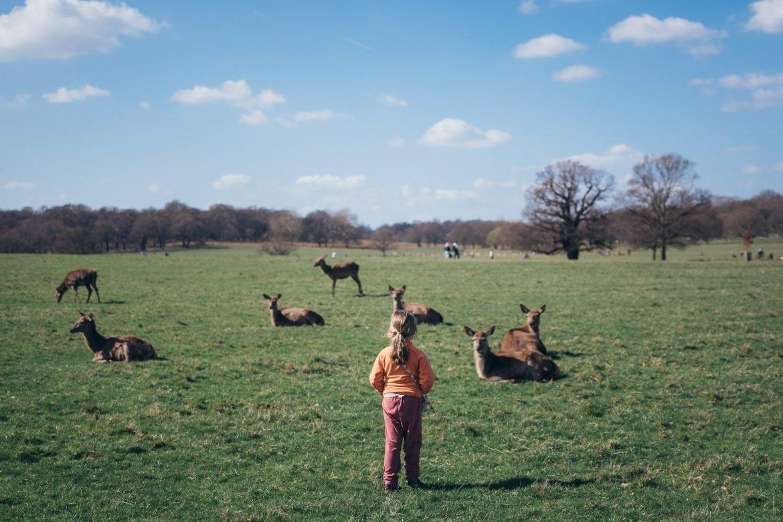 girl watching deer in richmond park