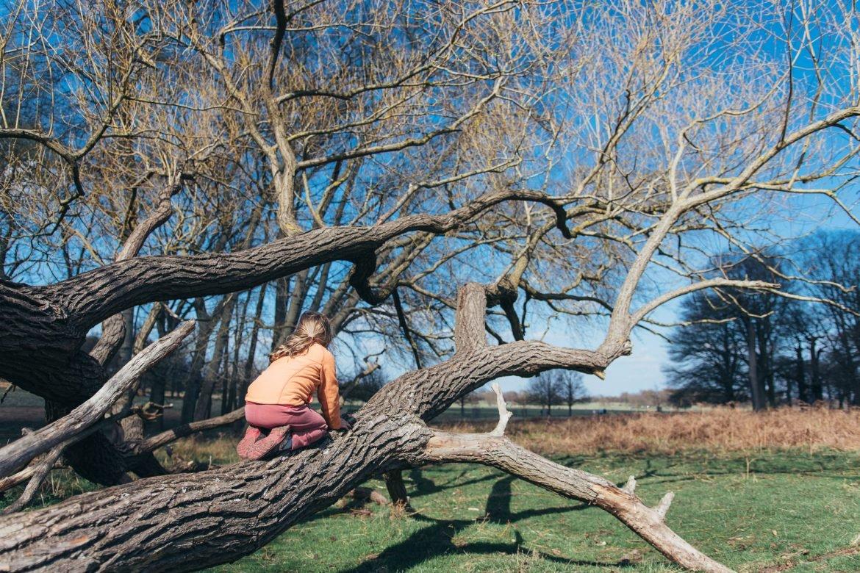 climbing a tree in richmond park