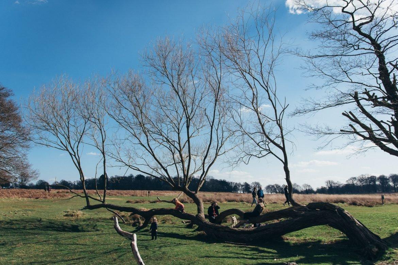 Richmond Park old tree