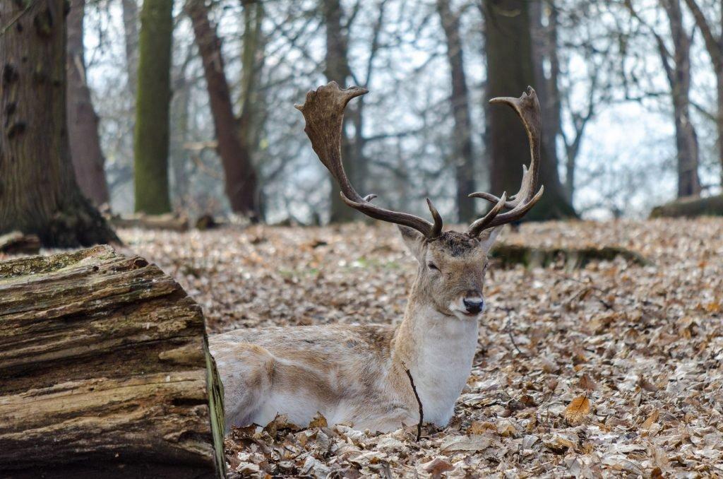 animals in richmond park
