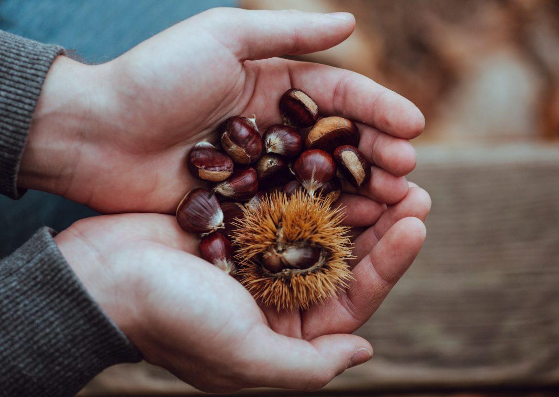 chestnuts from weavers fields